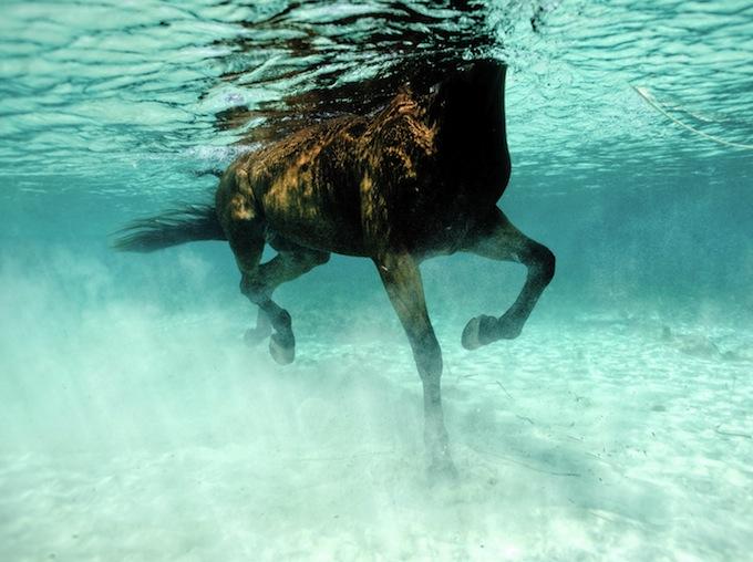 UW_horse_1154_DxOFP4