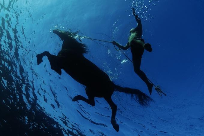 b_swimming-horse_1059_