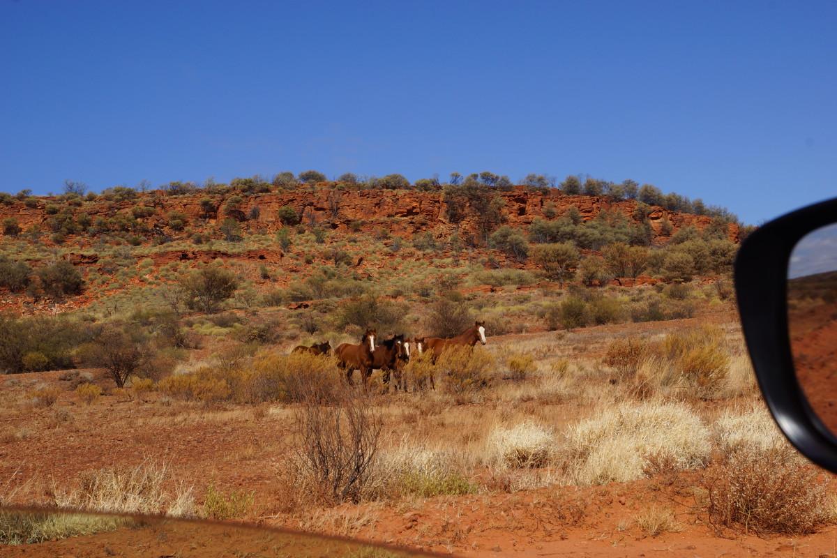 Auch Freiheit bekommt eine völlig neue Bedeutung - das beste Beispiel liefern wildlebende Pferde