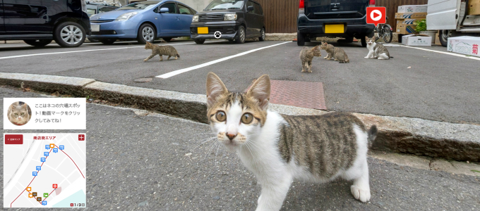 google street view cats 4