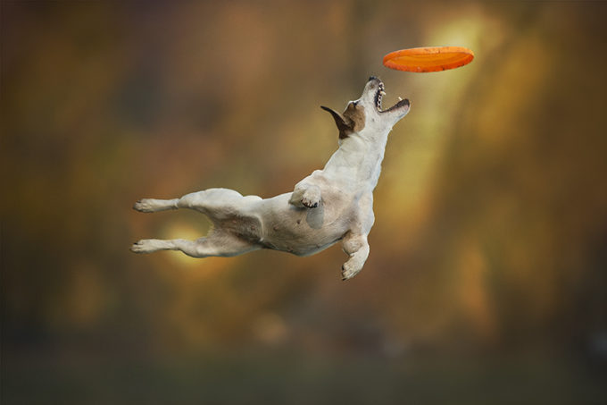 Dogs can fly