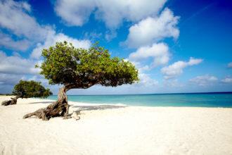 divi-trees-on-eagle-beach