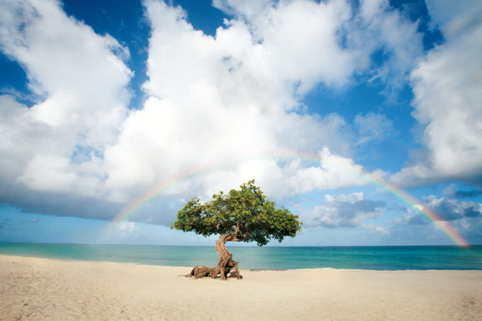 fofoti-tree-on-eagle-beach-with-rainbow