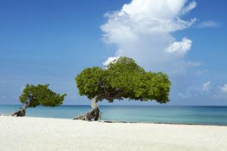 two-fofoti-trees-on-the-beach